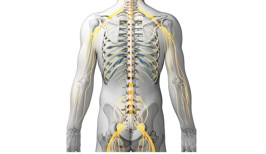 How a Herniated Disc Affects Nerve Function in the Extremities | New ...